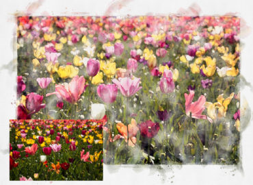 Angie Windheim turns fine art photography into digital watercolor for Kindness Roots
