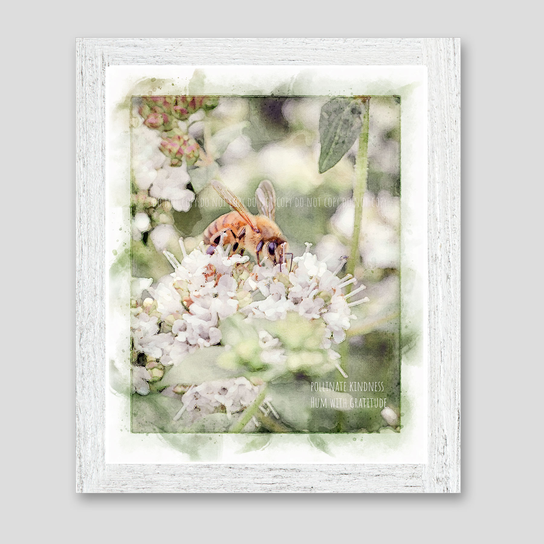 """A honey bee pollinates a white Jupiter's beard flower in watercolor with quote """"Pollinate Kindness. Hum with Gratitude."""""""