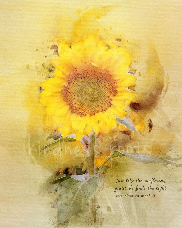"""A watercolor of a single sunflower with text that reads, """"Just like the sunflower, gratitude finds the light and rises to meet it."""""""