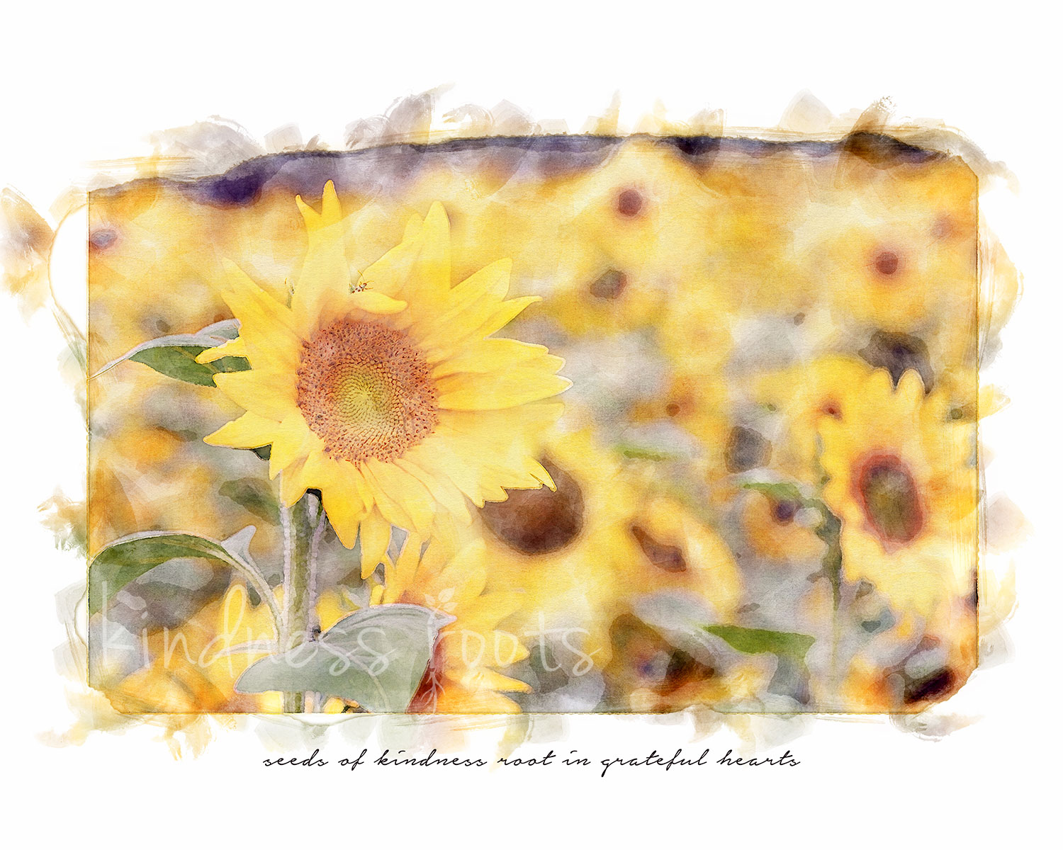 """A watercolor image of a sunflower field in bloom with kindness quote that reads """"seeds of kindness root in grateful hearts."""""""