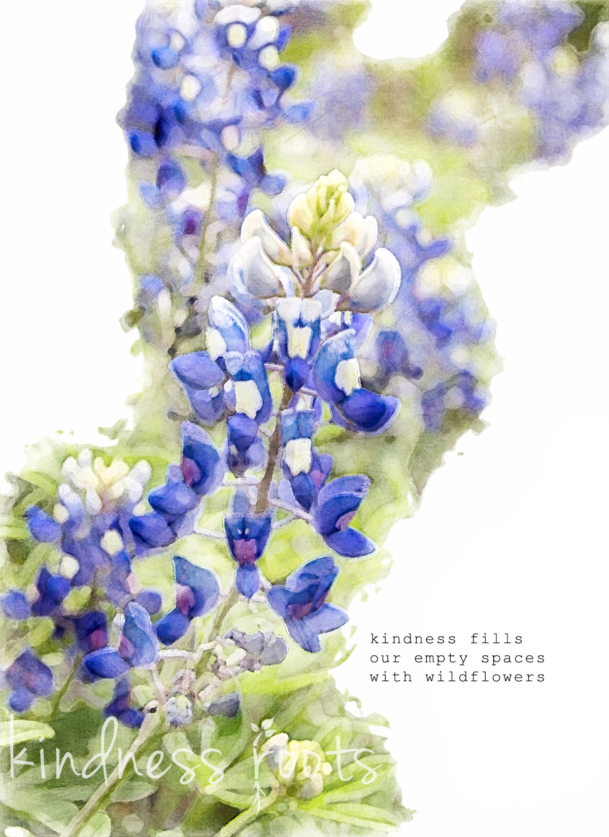 """Kindness Roots gratitude card cover with bluebonnets and kindness quote, """"Kindness fills our empty spaces with wildflowers"""""""