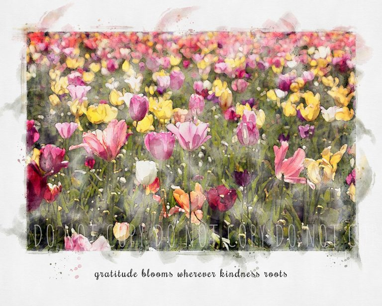 """Watercolor of an Oregon tulip field in reds and yellows with quote that reads, """"gratitude blooms wherever kindness roots"""""""